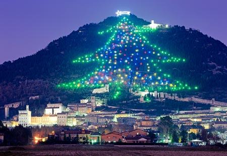 Monte Ingino Tree