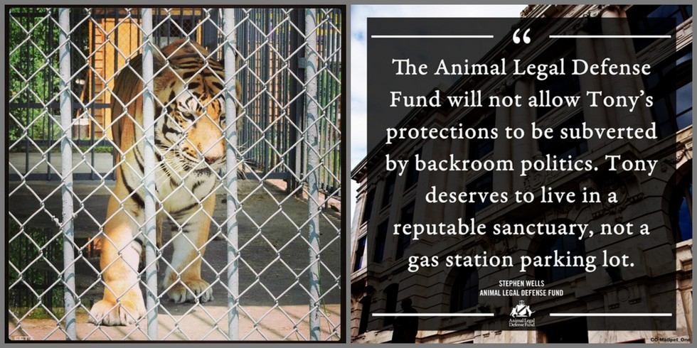 Photo: ©FreeTonyTheTiger2014 | ©The Animal Legal Defense Fund