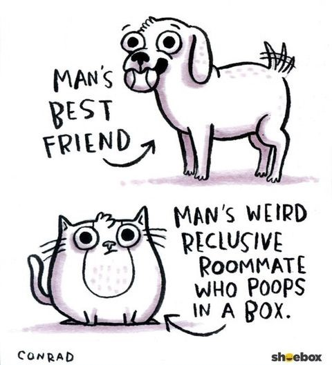 Cats and Dogs as a friend